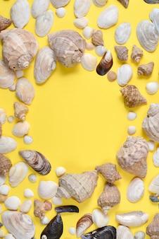 Vista superiore di vari tipi di conchiglie su sfondo giallo.