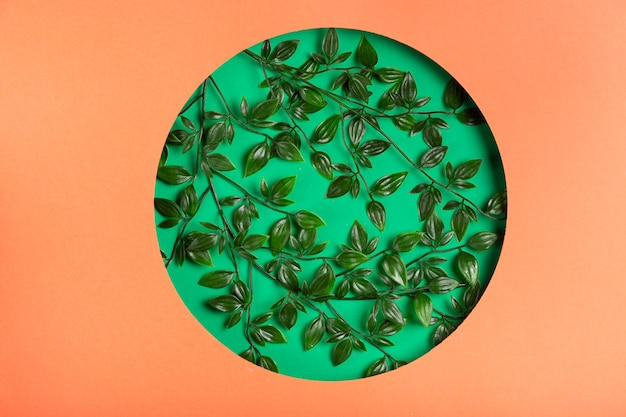 Vista superiore foglie realistiche nel cerchio di carta