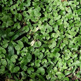 Vista superiore verde foglie tropicali e fiori sullo sfondo