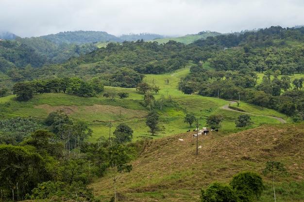 Vista tropicale della foresta pluviale in tempo piovoso alla costa rica