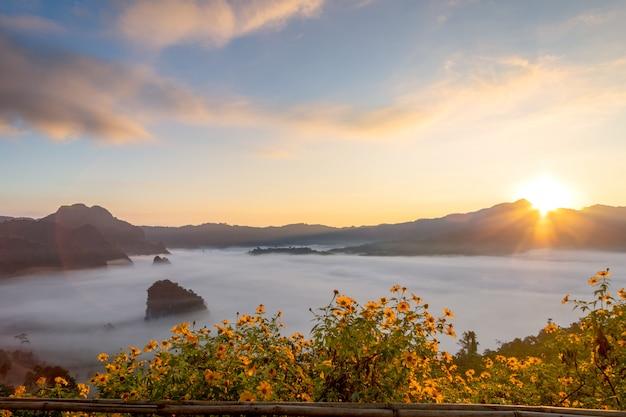 Viste del fiore e della montagna del parco nazionale di phu langka, tailandia