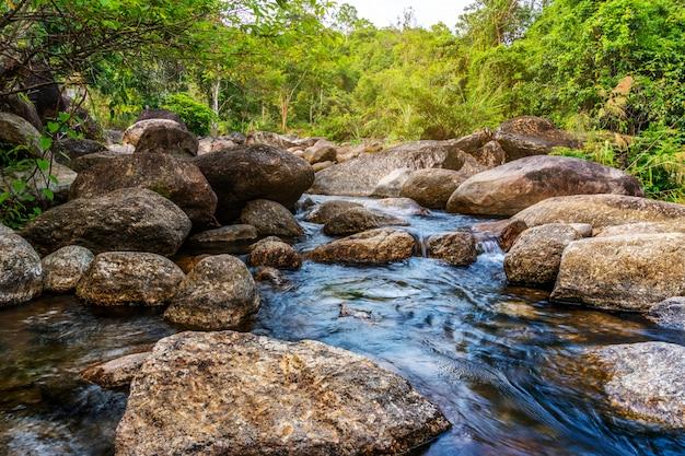 Visualizza l'albero del fiume acqua nella foresta