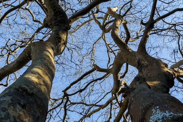 Visualizza su alberi senza foglie e cielo