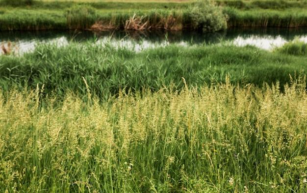 Vita da fattoria con fiume