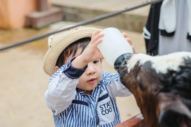 Vitello di mungitura del bambino asiatico sveglio del primo piano dalla bottiglia di latte nel fondo dell'azienda agricola