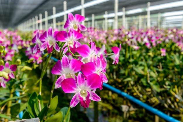 Vivaio di orchidee
