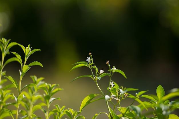 Vivaio e orto biologico per un'alimentazione sana. messa a fuoco selettiva su giovani lussureggianti foglie verdi da agricoltura biologica. profondità di campo molto bassa.