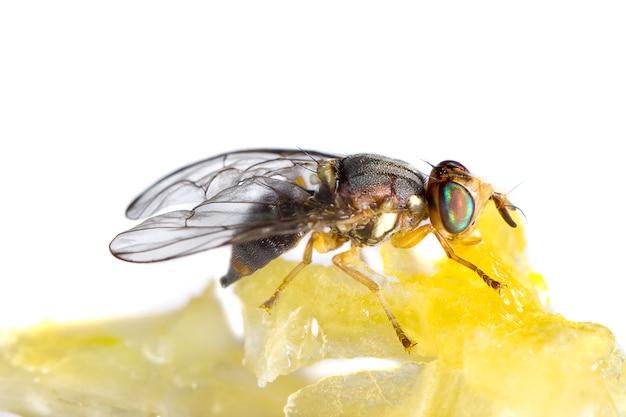 Vola nutrendosi di miele