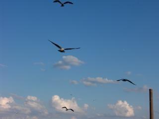 Volo degli uccelli
