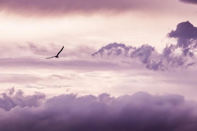 Volo del gabbiano con sfondo nuvole
