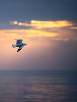 Volo del gabbiano nel cielo sopra il mare.