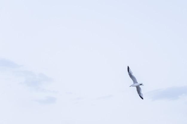 Volo del gabbiano sotto il cielo blu