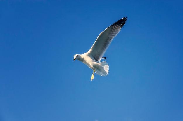 Volo del gabbiano sul cielo blu
