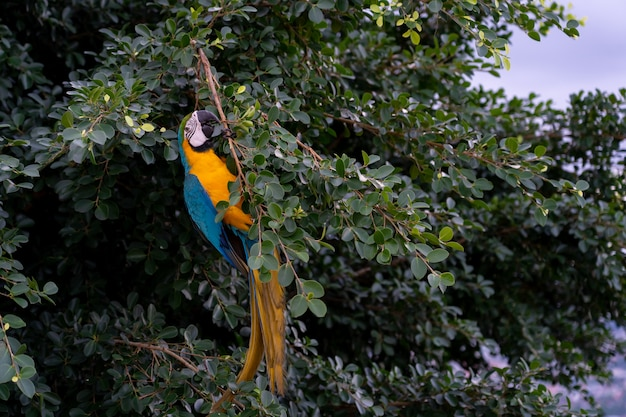 Volo dell'africa macaw