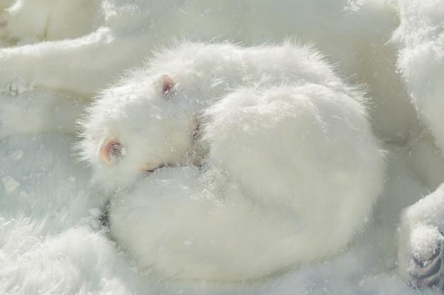 Volpe artica artificiale che dorme sulla neve.