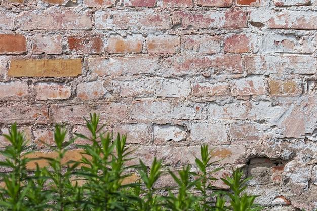 Vuoto vecchio muro di mattoni texture. superficie della parete grungy verniciata. fondo rosso del muro di pietra di lerciume. squallida facciata di edificio con intonaco danneggiato.