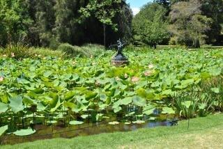Water garden fiori