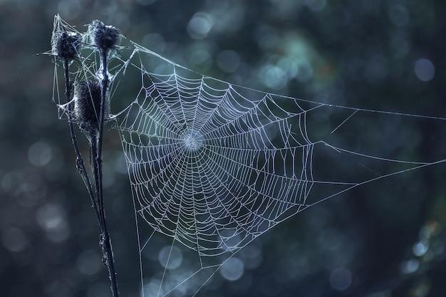 Web bianco su sfondo scuro di notte con la luna