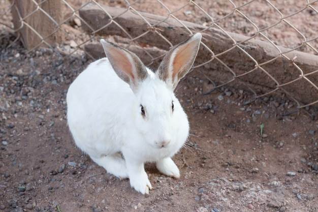 White rabbit seleziona fuoco sfocato sullo sfondo, bel coniglio, conigli bianchi sul pavimento