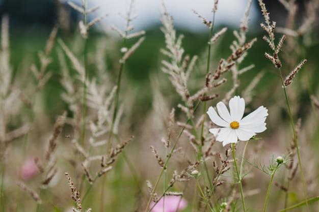 Wildflowers su un primo piano del prato