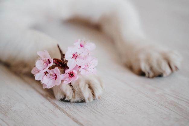 Zampe di cane con un mazzo di fiori di mandorlo