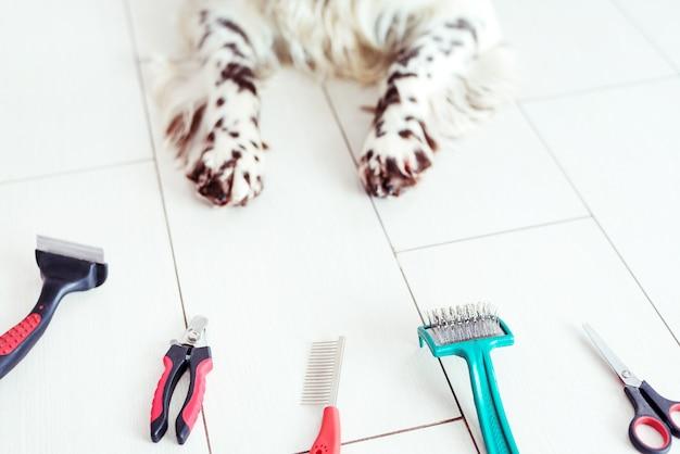 Zampe di cane sul pavimento accanto accessori per la toelettatura e tagliaunghie per cani. concetto di toelettatura pubblicitaria.