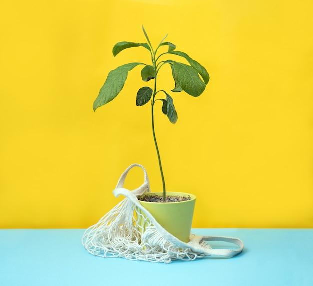 Zero shopping concept. pianta verde in sacchetto di cotone su sfondo giallo
