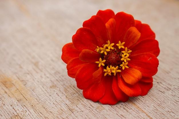 Zinnia flower on wood plank
