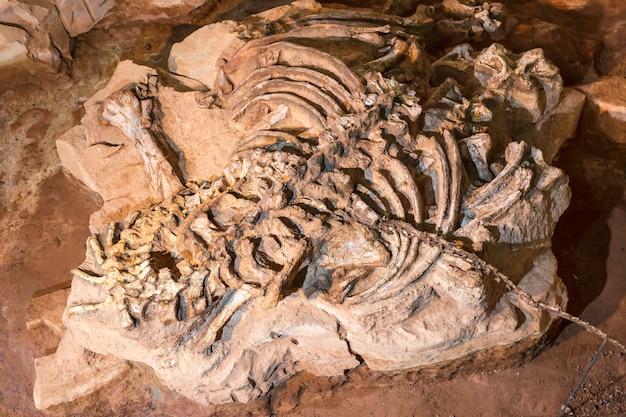 Zona di scavo dell'osso di dinosauro. luogo in asia.