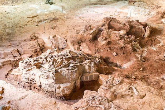 Zona di scavo dell'osso di dinosauro.