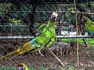 Zoo pappagallo, il bastone