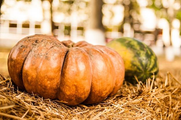 Zucca arancione nel fieno. autunno. raccogliere.