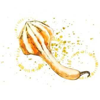 Zucca. pittura ad acquerello disegnata a mano su bianco. illustrazione ad acquerello con una spruzzata.