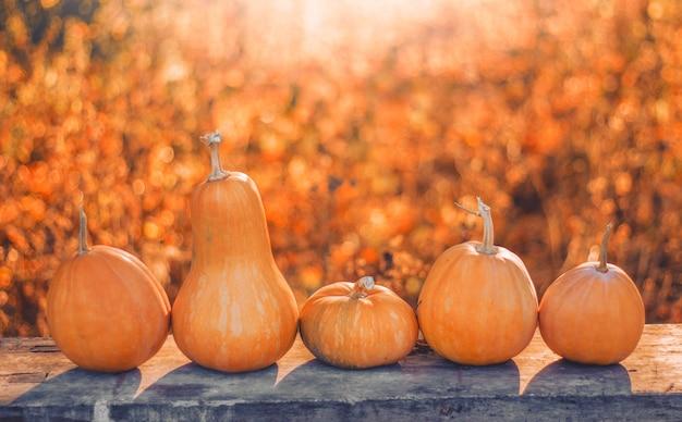 Zucche arancioni di forma diversa sul tavolo grigio di legno nel parco all'aperto con la luce del tramonto