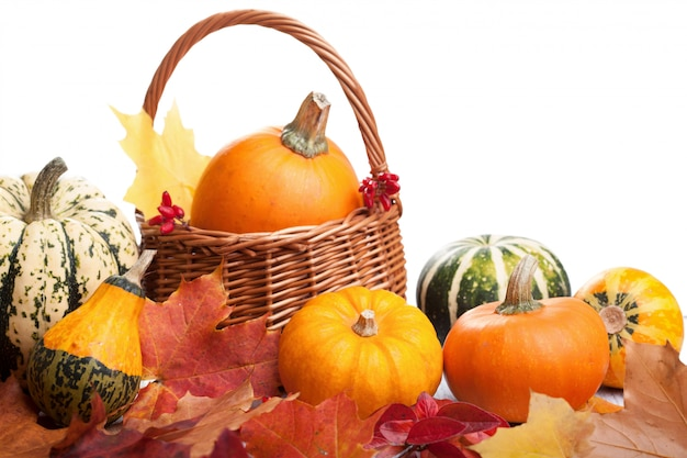 Zucche decorative e foglie di autunno isolate