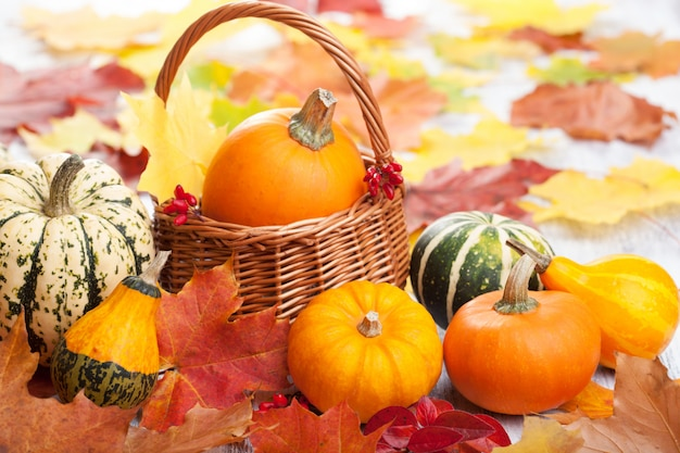 Zucche decorative e foglie di autunno