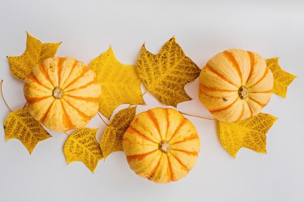 Zucche di autunno e foglie di caduta su bianco