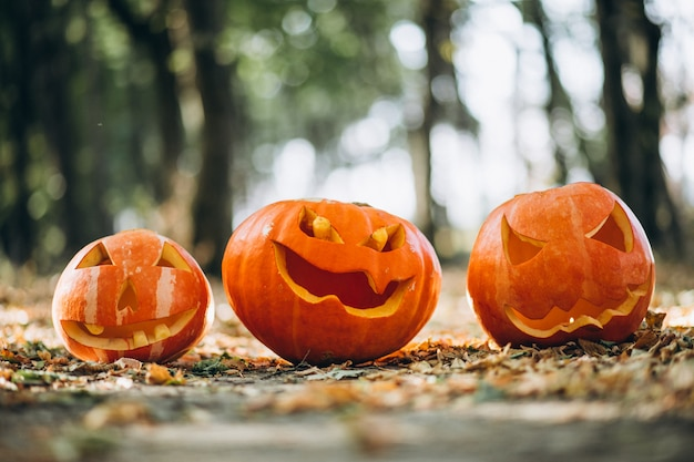 Zucche di halloween in una foresta di autunno