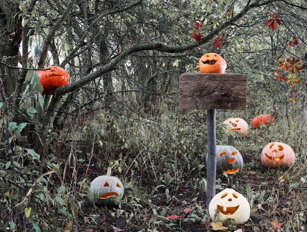 Zucche di halloween nella foresta