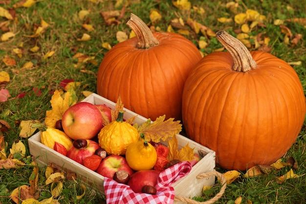 Zucche, mele, castagne e foglie gialle su una scatola