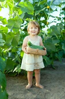 2 anos de colheita de pepino infantil