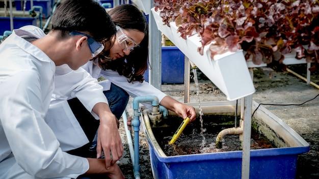 2 os cientistas examinaram a qualidade da salada de vegetais orgânicos e da alface da fazenda hidropônica do agricultor.