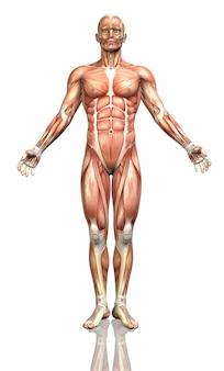 3d rendem de uma figura masculina com um mapa detalhado do músculo