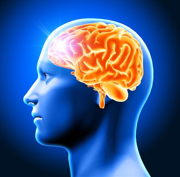 3d, render, macho, cabeça, mostrando, cérebro