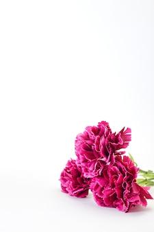 8 de março carnation dia das mulheres