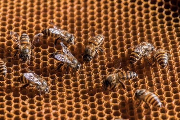 A abelha está no favo de mel.