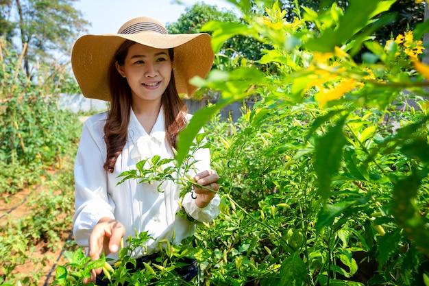 A agricultora asiática está cuidando de sua horta orgânica e mantendo legumes frescos para sua casa.