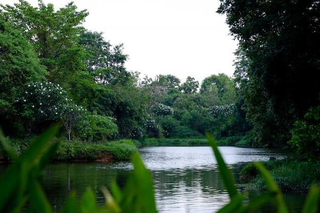 A água flui através da natureza e da abundância de árvores no córrego.