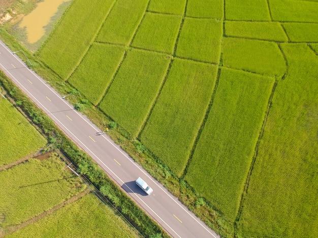 A almofada de arroz do verde da vista aérea arquivou de cima de, da exploração agrícola e da terra agrícola em kalasin em thiland.