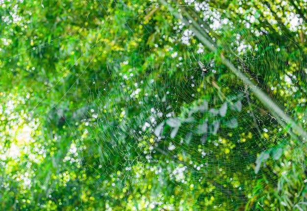 A aranha nas folhas e teias de aranha no ramo de bambu.